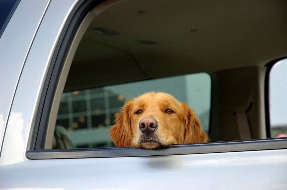 places to take your dog in Wilmington | Jeff Gordon Chevy | Wilmington, NC
