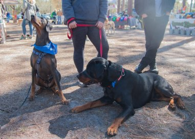 13 Annual Walk & Dog Dash 3.23.19