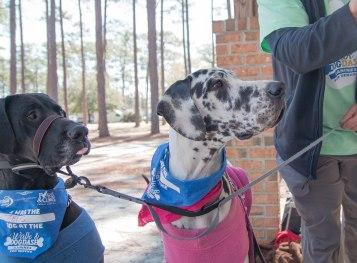 13 Annual Walk & Dog Dash 3.23.19