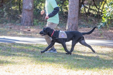 13th Annual Walk & Dog Dash Canines for Service March 23, 2019 Hugh MacRae Park