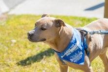 13th Annual Walk & Dog Dash Canines for Service March 23, 2019 Hugh MacRae Park