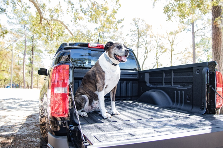 U1858 Chevrolet Black Colorado Dog Shoot April 10, 2019-19.jpg